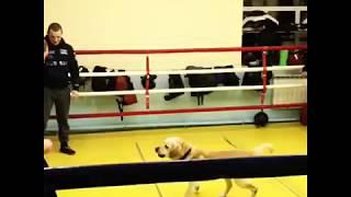 Видео: Разминка Павла Маликова с собакой в ринге