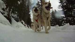 preview picture of video 'Sleddog emotions - www.huskyvillage.it'