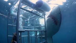5 Angriest Sharks That Appeared Out Of Nowhere!
