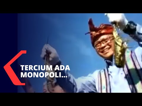 sebelum diungkap kpk kppu cium ada monopoli ekspor benih lobster