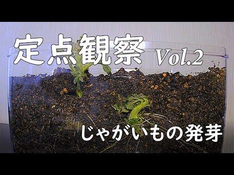 , title : '【定点観察】#2じゃがいもの発芽!中3必見!栄養生殖でふえる植物じゃがいも