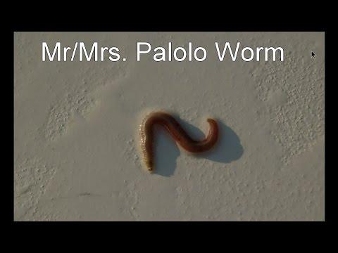 Worm climbs ng pusa