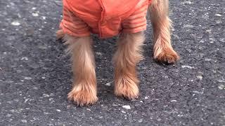 Dog Dies Following Attack in Sudbury
