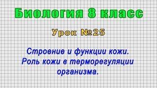 Биология 8 класс Урок 25