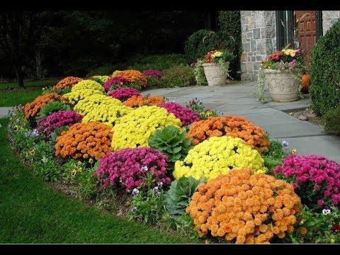 Цветы на даче  Как сажать цветы чтобы дача утопала в цветах