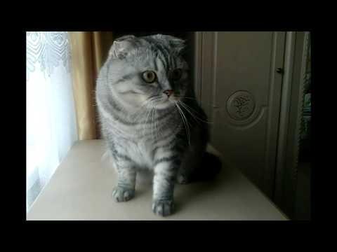 Шухер! Пора линять! Забавный котик- Моня. Funny cat.