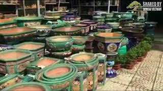 Vườn Bonsai và chậu Gốm Quảng Ngãi (0905024120)