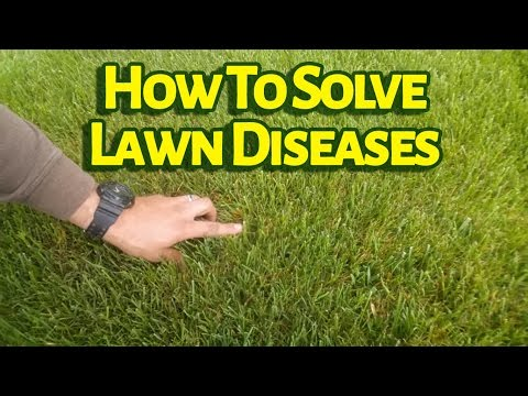 Video Do You Know What Fungicide Controls Lawn Diseases Like Brown Patch?