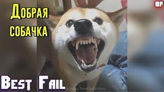 ПРИКОЛЫ 2017 Декабрь #207 ржака до слез угар прикол - ПРИКОЛЮХА