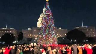 Congress lights Christmas tree