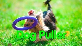 Dog Puller. Dog show. Odessa. Дог-пуллер. Чемпионат Одессы. Спорт с собаками. Собаководы. VLOG DOG.