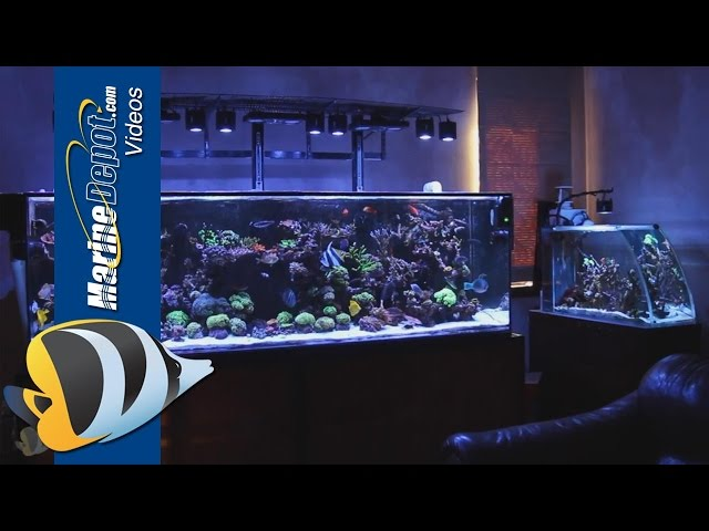 Marine Depot Featured Tank: Matt's Fully Loaded 300 Gallon Mixed Reef