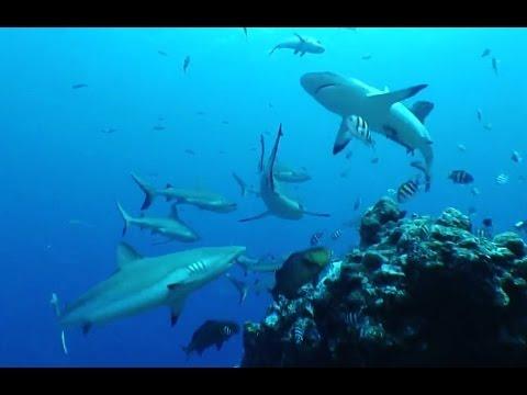 Die Haie von Yap, Yap allgemein,Yap,Mikronesien