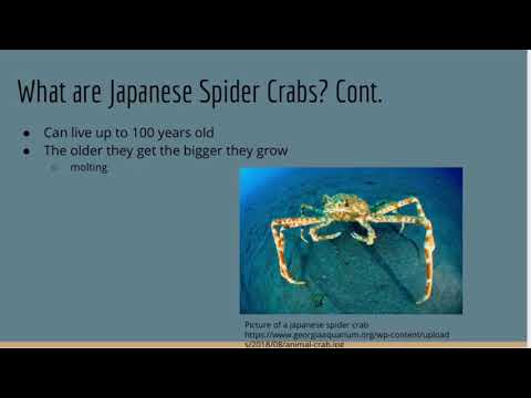 Japanese Spider Crab Oceanography Project