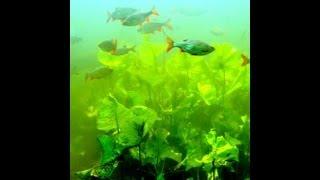 preview picture of video 'Mut zur Wildnis - im Wildgarten Furth im Wald (HD)'