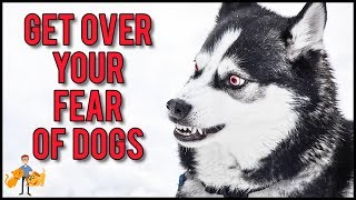 How To Get Over A Fear Of Dogs in 11 Simple Steps