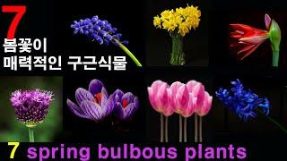 7 봄꽃이 매력적인 구근식물 /  7 Spring Bulbous Plants