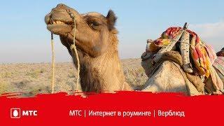 МТС   Интернет в роуминге   Верблюд