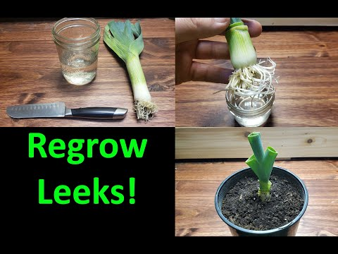 , title : 'How To Grow A New Leek From A Leek! - 2020