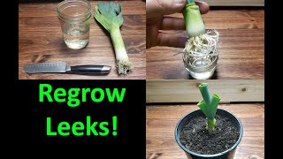 How To Grow A New Leek From A Leek! - 2020