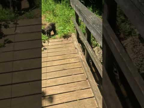 Tipsaw Lake Trail