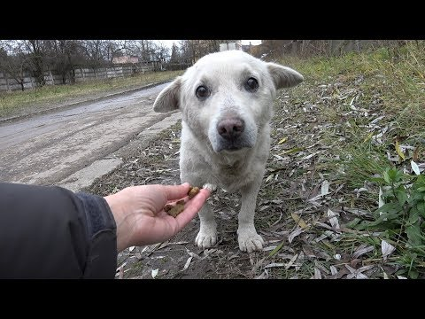 Cute homeless dog gets rescued.