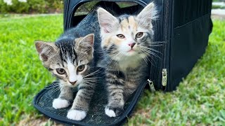 Kittens Go Outside for the First Time