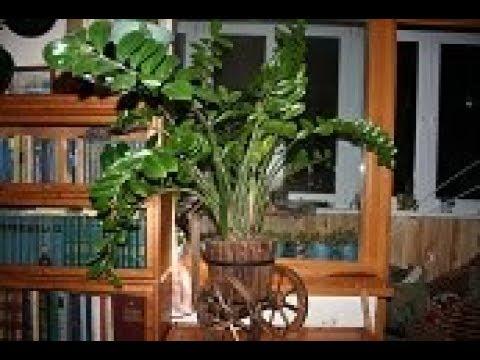 Общие правила ухода за комнатными растениями зимой