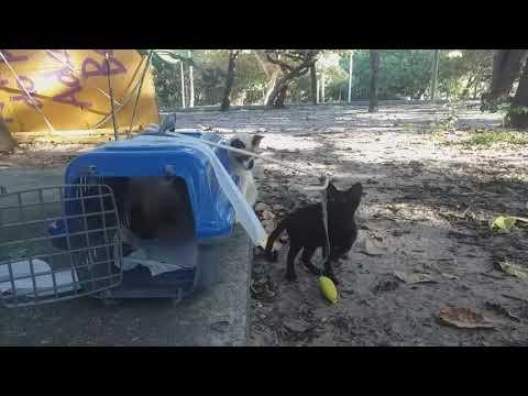 International Cat Day video!