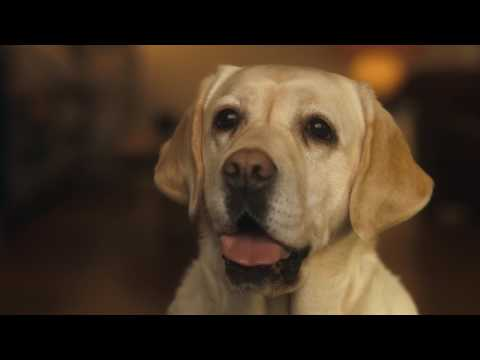 Andrex Commercial (2017) (Television Commercial)