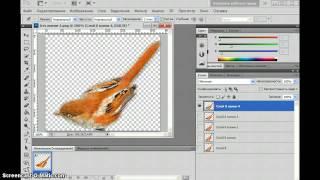 Анимация птички в фотошопе марионеточной деформацией
