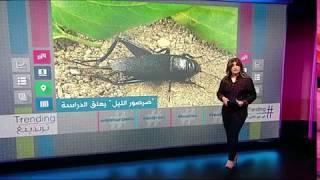 الصراصير تقتحم مدرسة في السعودية وتتسبب في توقف الدراسة
