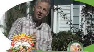 Gardening with Ken - How to Plant a Japanese Maple