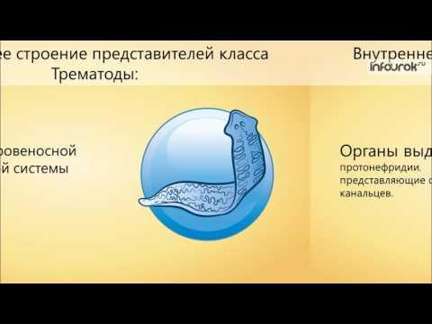 Лямблии и полипы в желчном пузыре