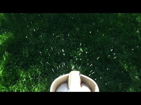 Spoon Feeding Your Lawn in the Fall