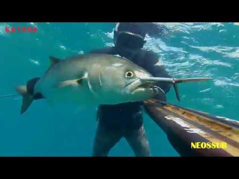 La pesca in Primorsko-Akhtarsk un forum