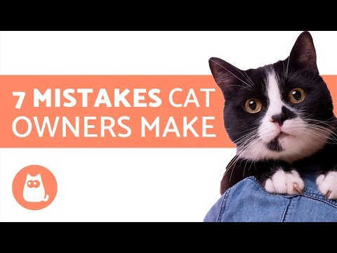 Download 7 Mistakes cat owners make Mp4 HD Video and MP3