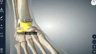 Sports Injuries: Growth Plates