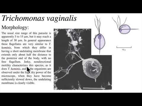 Fogyasztói parazita