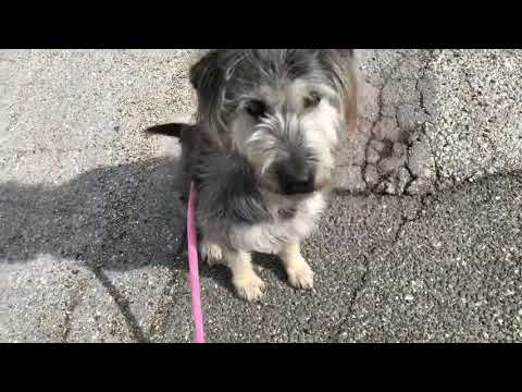 Cola, an adoptable Terrier in Long Beach, NY