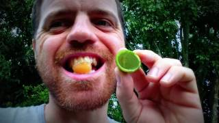Discovering Mamoncillo (Spanish lime) fruit of Colombia