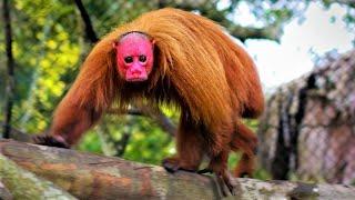 Strange Monkeys You Won't Believe Actually Exist