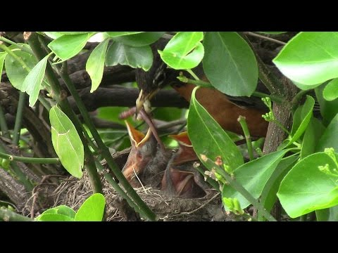 Ay na-pansin sa katawan ng mga parasito