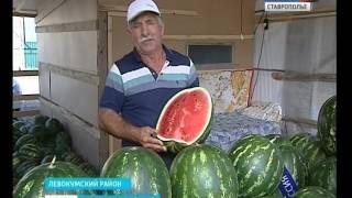 """""""Обожглись"""" на арбузах"""