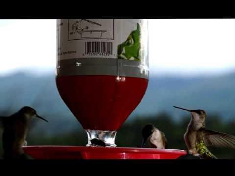 Copy of VERY VERY Long Hummingbird Movie