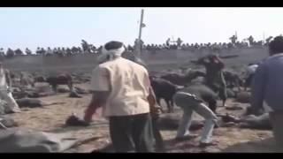 RITUAL ACARA SEMBELIH HEWAN AGAMA HINDU DI NEPAL