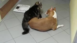 Мейн кун борется с собакой