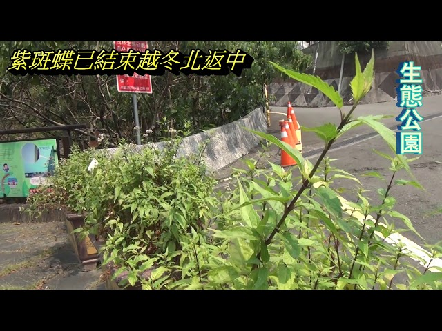 <html> <body> Film for Purple Butterfly2020-3-17 </body> </html>