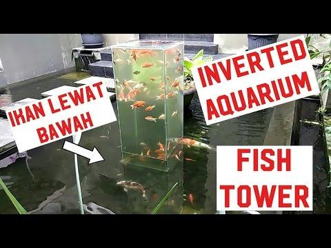 Cara membuat akuarium biasa jadi luar biasa inverted aquarium fish tower