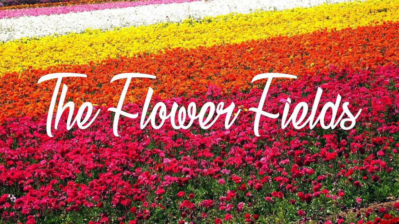 Visit the Carlsbad Flower Fields